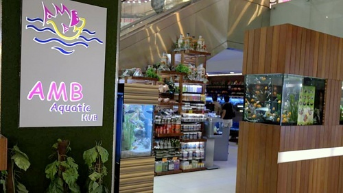 AMB Aquatic HUB aquarium pet store Singapore.